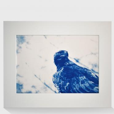 Cyanotype Aigle royal #4