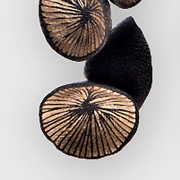 Earrings Nénuphar