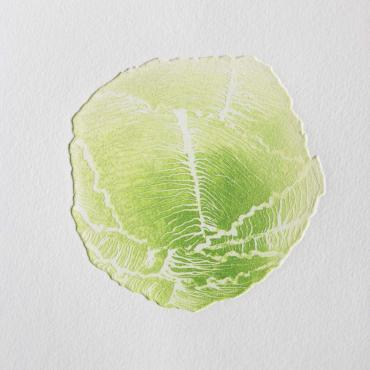 Engraving Green cabbage