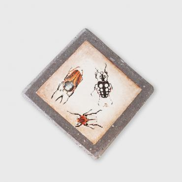 Coaster insects in enamelled lava