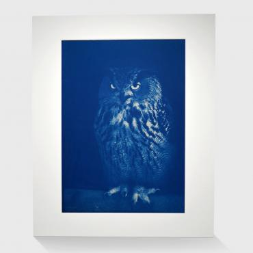 Cyanotype Grand Duc #3 (n°1/30)