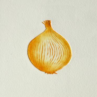Engraving Yellow Onion